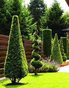 Lawn and Garden – Simple Tips For Success Topiary Garden, Topiary Trees, Garden Art, Front House Landscaping, Backyard Landscaping, Small Garden Design, Garden Landscape Design, Outdoor Plants, Outdoor Gardens