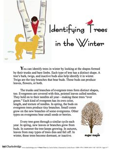 Here's a teacher's guide for the book WINTER TREES by Carole Gerber.
