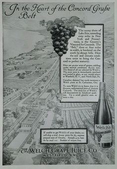 1914 antique print ad WELCH'S Concord Grape Westfield NY vineyard Lake Erie