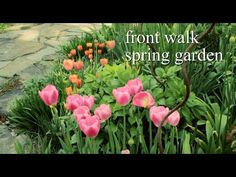 TOP TIPS ON PLANTING SPRING BLOOMING BULBS - http://www.gardenpicsandtips.com/top-tips-on-planting-spring-blooming-bulbs/