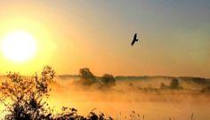 GOLDEN #SUN #GLOWS  n' #EAGLE  <3