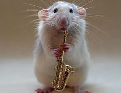 musicchick48:  this makes me smile everytime i look at it.  play that sexy sax lil guy!