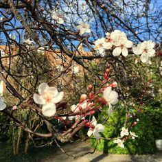 Buds in the park 🌸🌺🌷🌻 St Brigid, Bud, My Photos, Floral Wreath, Wreaths, Park, Spring, Instagram Posts, Door Wreaths