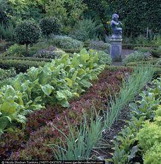 garden rows are super close together in formal edible landscape parterres
