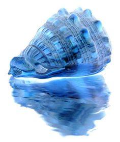 just for fun by karin_b1966, via Flickr #blue #seashell