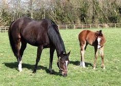 You'resothrilling(2005)(Filly) Storm Cat- Mariah's Storm By Rahy. 4x5 To Bold Ruler, 4(F)x5(F) To Hail To Reason, 5x5 To Nasrullah. 7 Starts 2 Wins 2 Seconds. Won Cherry Hilton S(Eng-2), Swordletown Sprint S(Ire-3)), 2nd Albany S(Eng-3), Marble Hill S(Eng). Full Sister To Giant's Causeway. Dam Of Gleneagles, Marvelous, Coolmore, Happily, Etc.