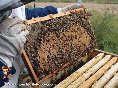 Beekeeping - what to consider BEFORE you get bees!   ImperfectlyHappy.com