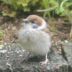 Fat Bird, Sparrows, Wildlife, Birds, Garden, Animals, Instagram, Garten, Animales