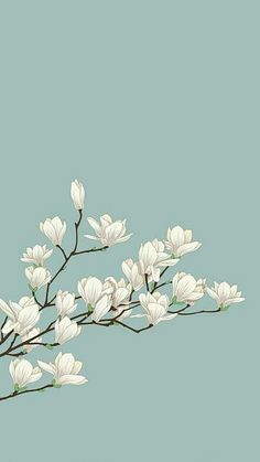 white flowers with green background. cute white flowers with green background. Screen Wallpaper, Mobile Wallpaper, Wallpaper Backgrounds, Iphone Wallpaper Zen, Plant Wallpaper, Emoji Wallpaper, Wallpaper Designs, Dark Wallpaper, Trendy Wallpaper