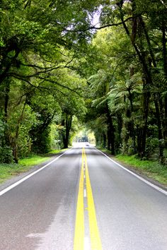 The road between Hamilton and Rotorua (called Fitzgerald Glade), passes through beautiful natural trees and ferns. New Zealand.