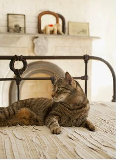 10 Tips for a Safe and Stylish #Holiday With Your #Cat(s) | #ihavecat.com