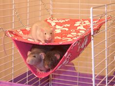 rat hammock - Google Search