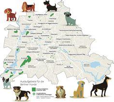Wo dürfen Hunde in Berlin noch von der Leine?