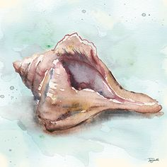 See this image on Roaring Brook Art: RB9493TS Watercolor Shells III