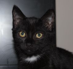 Hi! I'm Pearl from Townsville. I'm just a little kitten looking for a home to call my own. I'd love for it to be yours!