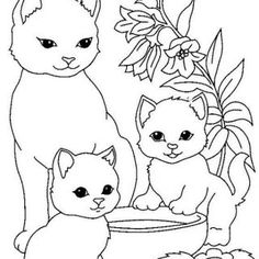 Kedi Boyama Resmi Okul öncesi Coloring Sheets Cat Colors Ve