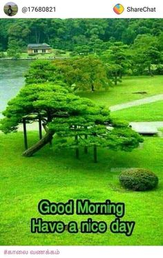 Cute Good Morning Images, Good Morning Flowers, Good Morning Gif, Good Morning Picture, Good Morning Messages, Good Morning Wishes, Monday Morning Coffee, Morning Coffee Funny, Wednesday Morning