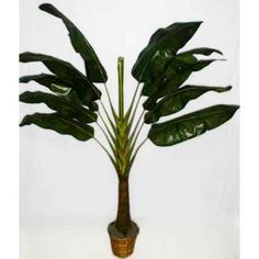 7 foot Traveller Palm Tree - $149.95