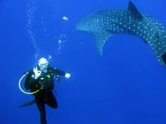 belize diving - Google zoeken