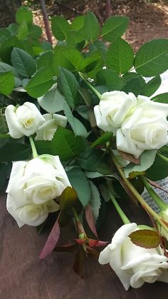 White Roses Yellow Roses, White Flowers, White Roses Wallpaper, Roses Only, Rose Of Sharon, Good Morning Flowers, Rose Cottage, Rose Bouquet, Beautiful Roses