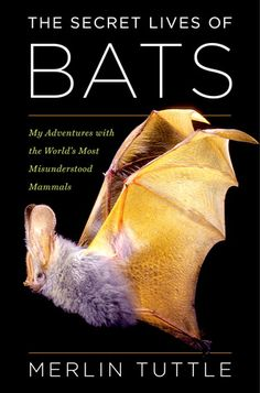 The Secret Lives of Bats by Merlin Tuttle covers a lifetime of learning about and campaigning for bats. It holds everything from his early days exploring caves –and getting lost on one terrifying occasion–to his founding of Bat Conservation International (BCI) and beyond. He takes the reader along on travels around the world capturing and calming bats so they can be photographed. This includes close encounters with moonshiners (many of whom became his friends) to bat poachers (who had him…