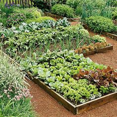 The goal of most kitchen gardens is to produce food efficiently and beautifully.
