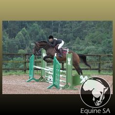 Charlies Island - Registered Thoroughbred - Horses for Sale Detail