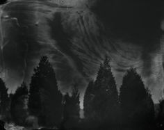 Sally Mann Looks Back on Life in the American South - Feature Shoot Sally Mann Photography, Eye Photography, Photography Gallery, Street Photography, Landscape Photography, Cedar Trees, Gelatin Silver Print, National Gallery Of Art, S Pic
