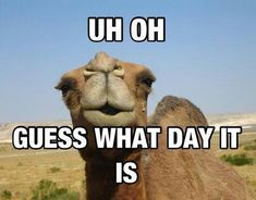 Uh Oh Guess What Day It Is quotes quote days of the week wednesday hump day hump day camel wednesday quotes humpday quotes happy wednesday
