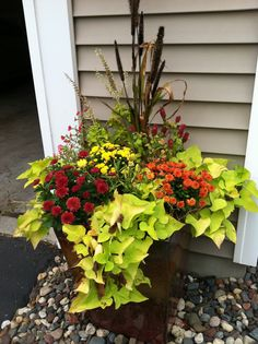 Fall planters - Mix fall plants into your summer planters. Pull out dead plants to make room for new fall flowers, but leave the living greens and remaining flowers from your summer planter to keep color.  Remaining summer flowers and greens: straw flower, shrimp plant, petunias, potato plant, and millet.  New fall flowers: chrysanthemums.