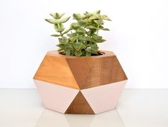This eye catching, wooden pot is hand-crafted from native New Zealand timber. Clean lines, pastel hues and the natural beauty of the wood will enhance any nook, bookshelf or table in your home. Succulent Pots, Plant Pots, Wooden Planters, Craft Shop, Business Design, Handmade Crafts, Clean Lines, Natural Beauty, Etsy