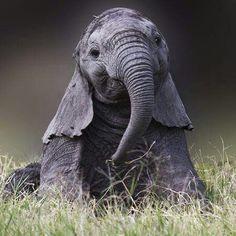 Pretty baby elephant