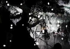 雨時々桜の画像(写真)