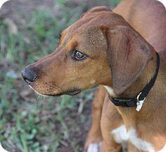 DFA RESCUE ACROSS THE NATION; Rescue info: Natchitoches, LA - Meet Arrow a Dog for Adoption.