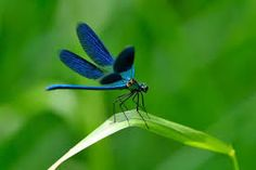 Dragonflies might be the most charming of all the flying insects. This easy science article for kids will give your kids fun time while studying facts about dragonflies. Where do dragonflies live and what do they eat? http://easyscienceforkids.com/all-about-dragonflies/
