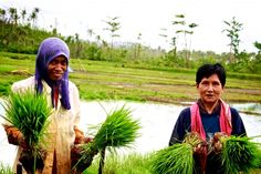 Restoring Livelihoods: Rice Production. Watch some of these strong women doing their share in restoring their families & their communities livelihoods! #WorldFoodProgramme