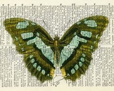 AMAZING -- Etsy - butterfly  olive aqua  vintage artwork printed on page by FauxKiss, $12.00