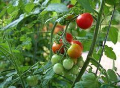 Gobierno invertirá un billón de pesos en el Agro