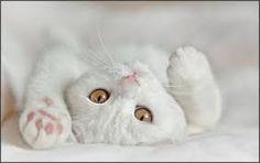 animais fofinhos - Pesquisa do Google