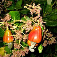 + Plantas: Plantas Que Atraem o Sabiá para o Jardim