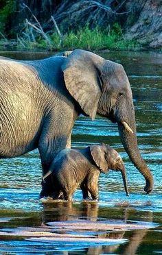 Mom & baby having a drink...