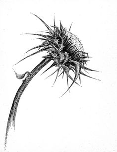 Thistle Drawing by TimBakerFX.deviantart.com on @deviantART