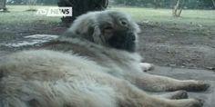 Spresiano (TV): cane rincorre un uomo che fa jogging. Lui lo sgozza con un coltello