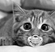 Ahhh Diddums! It's a real baby kitty.