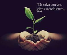 """""""Chi salva una vita, salva il mondo intero."""" Talmud"""