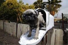 Adorable Dogs And Cats In Mailboxes
