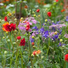 Such a cheery combination here with orange and red geums combined with pink hairy chervil
