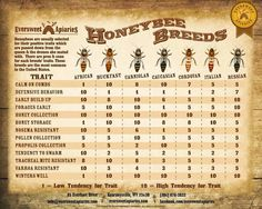 Honeybee traits by breed.