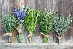 Bunches of herbs. Bunches of fresh aromatic herbs tied with string for drying , Herbs Image, Herb Bouquet, Kai, Different Types Of Tea, Perfect Cup Of Tea, Aromatic Herbs, Herbs Indoors, Dry Leaf