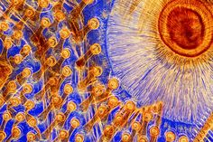Microscopic world: RPS Scientific Imaging Award 2016 – in pictures